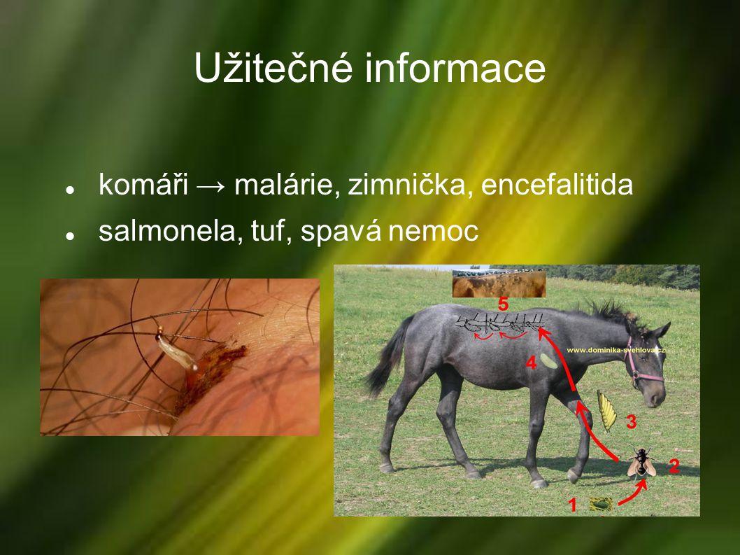 Užitečné informace komáři → malárie, zimnička, encefalitida