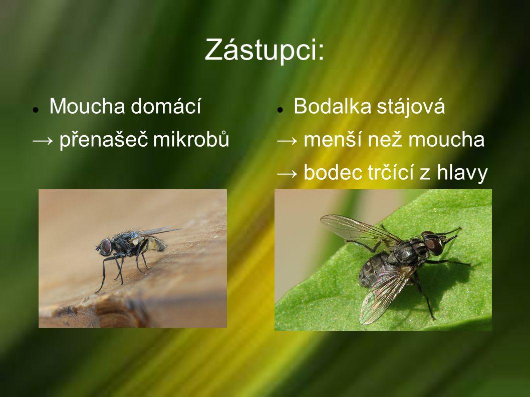 Zástupci: Moucha domácí → přenašeč mikrobů Bodalka stájová