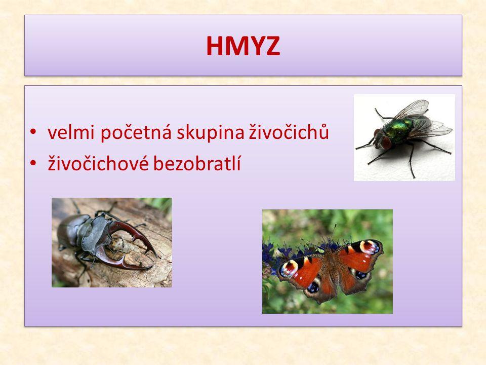 HMYZ velmi početná skupina živočichů živočichové bezobratlí
