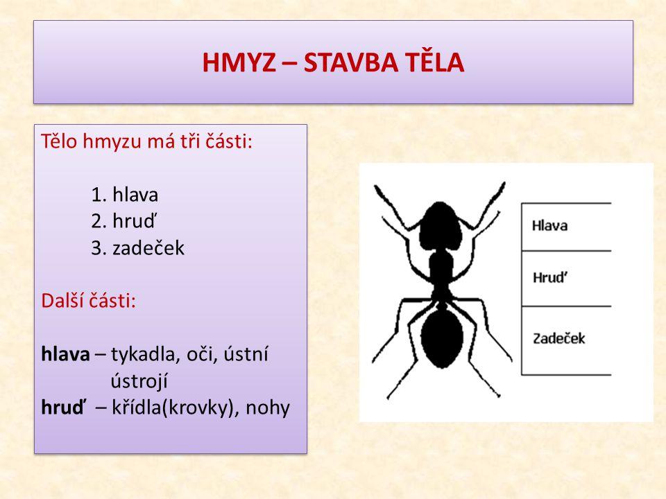 HMYZ – STAVBA TĚLA Tělo hmyzu má tři části: 1. hlava 2. hruď