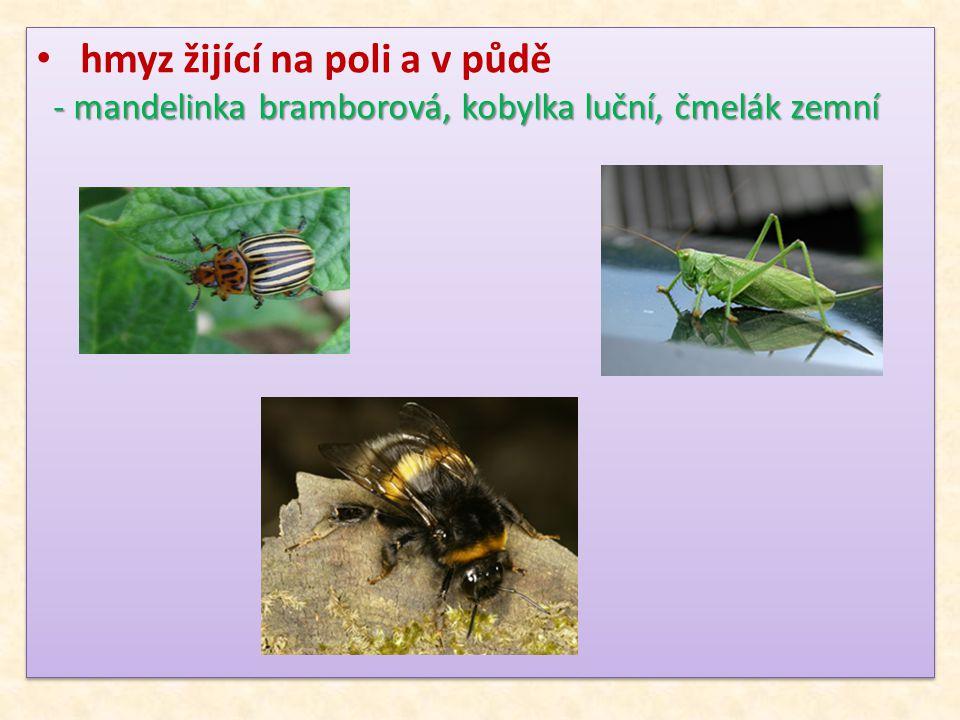 hmyz žijící na poli a v půdě