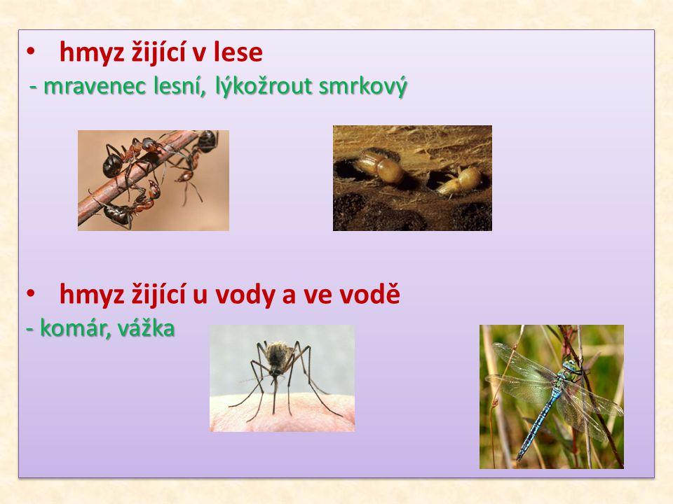 hmyz žijící u vody a ve vodě