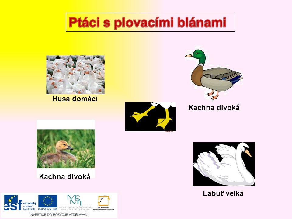 Ptáci s plovacími blánami