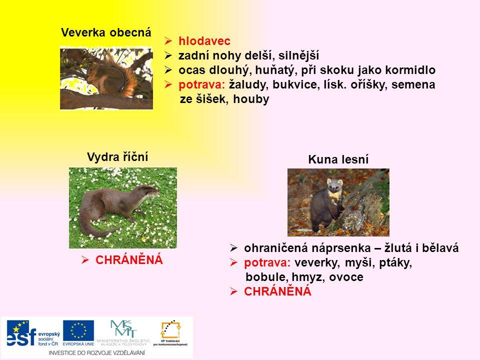 Veverka obecná hlodavec. zadní nohy delší, silnější. ocas dlouhý, huňatý, při skoku jako kormidlo.