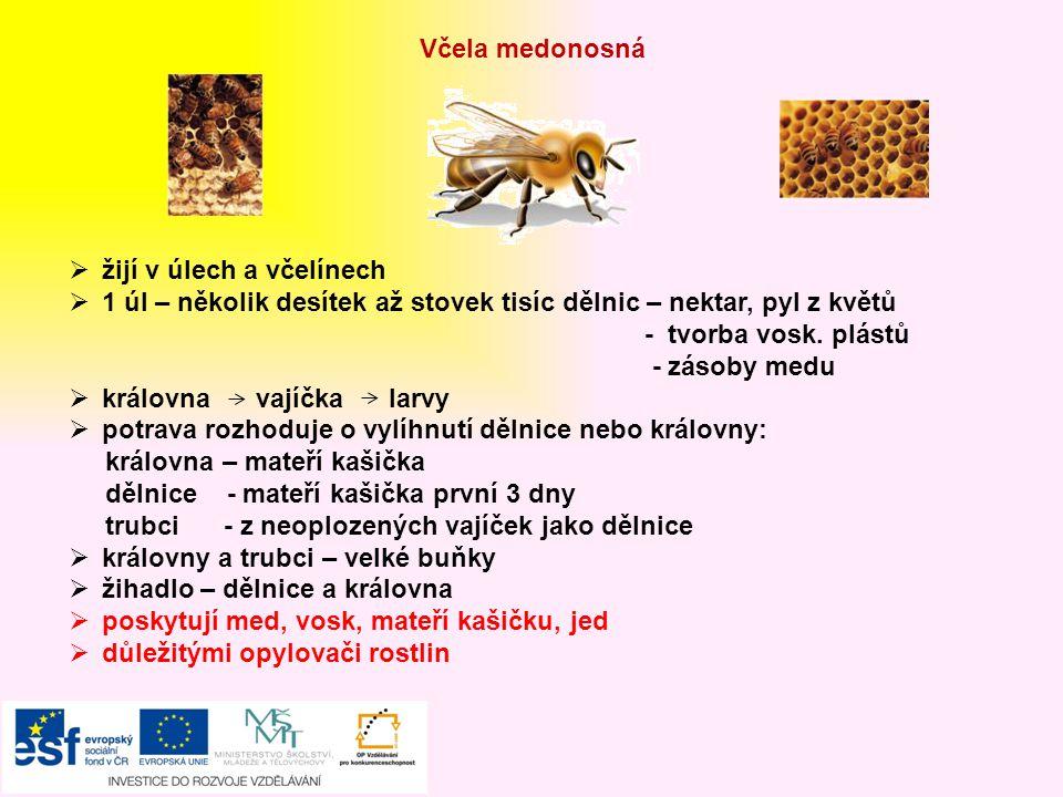 Včela medonosná žijí v úlech a včelínech. 1 úl – několik desítek až stovek tisíc dělnic – nektar, pyl z květů.