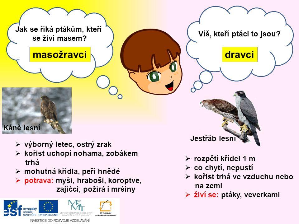 Jak se říká ptákům, kteří