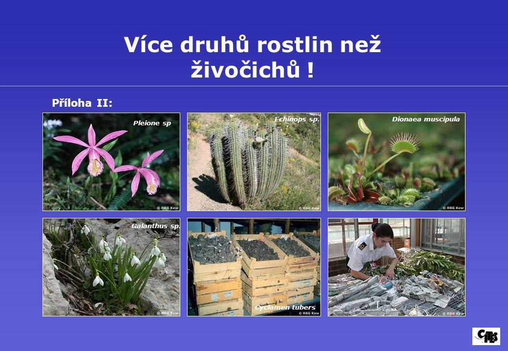 Více druhů rostlin než živočichů !