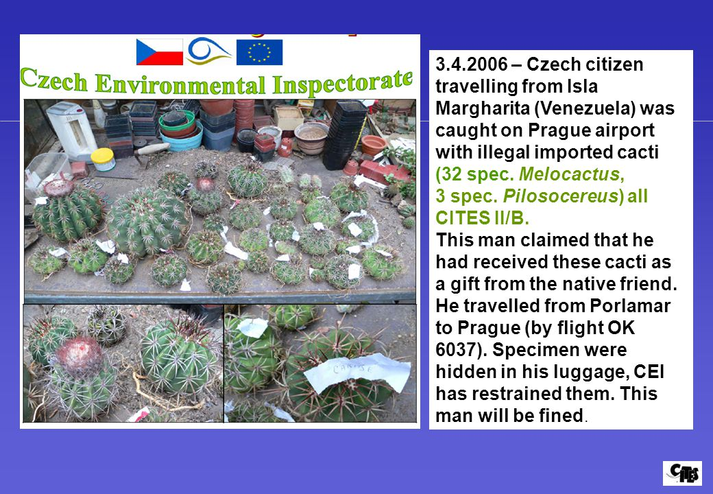 3.4.2006 – Czech citizen travelling from Isla Margharita (Venezuela) was caught on Prague airport with illegal imported cacti (32 spec. Melocactus,