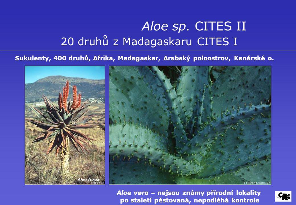 Aloe sp. CITES II 20 druhů z Madagaskaru CITES I