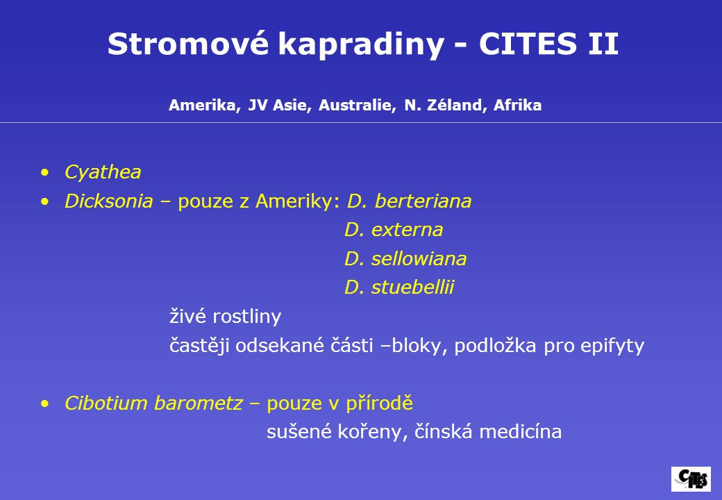 Stromové kapradiny - CITES II