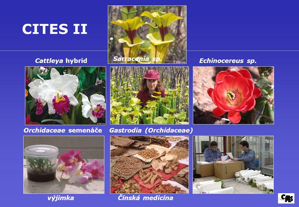 Gastrodia (Orchidaceae)
