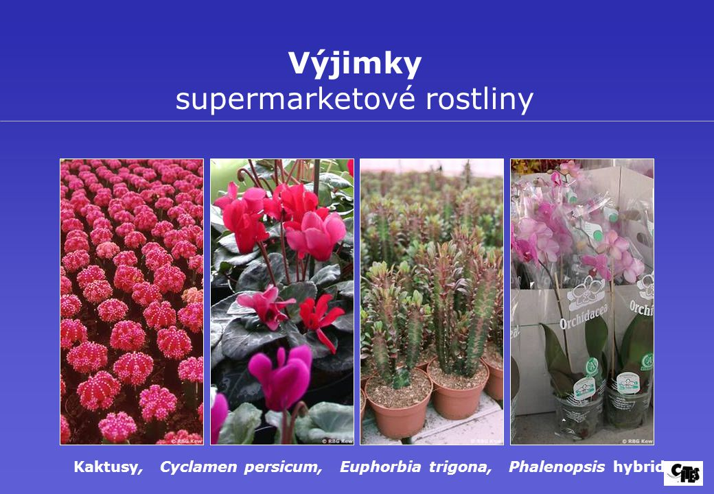 Výjimky supermarketové rostliny