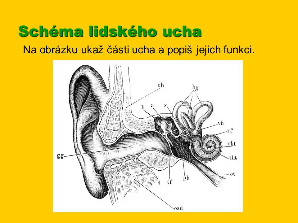Schéma lidského ucha Na obrázku ukaž části ucha a popiš jejich funkci.