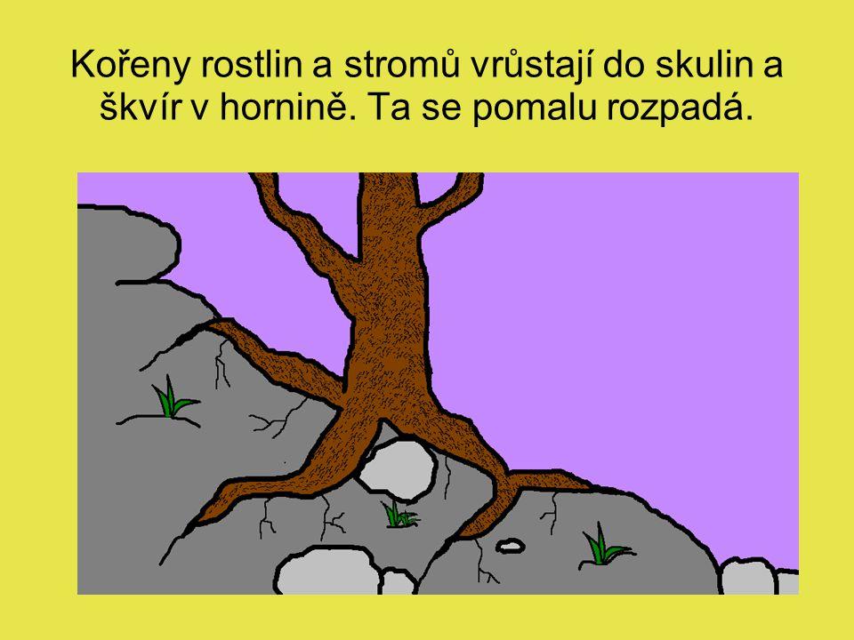 Kořeny rostlin a stromů vrůstají do skulin a škvír v hornině