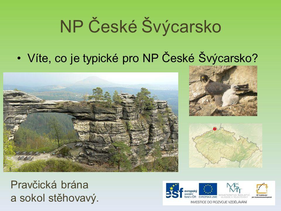 NP České Švýcarsko Víte, co je typické pro NP České Švýcarsko