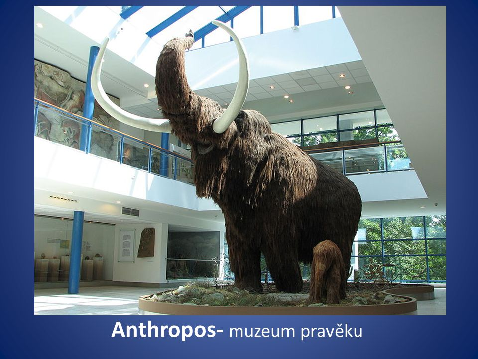 Anthropos- muzeum pravěku