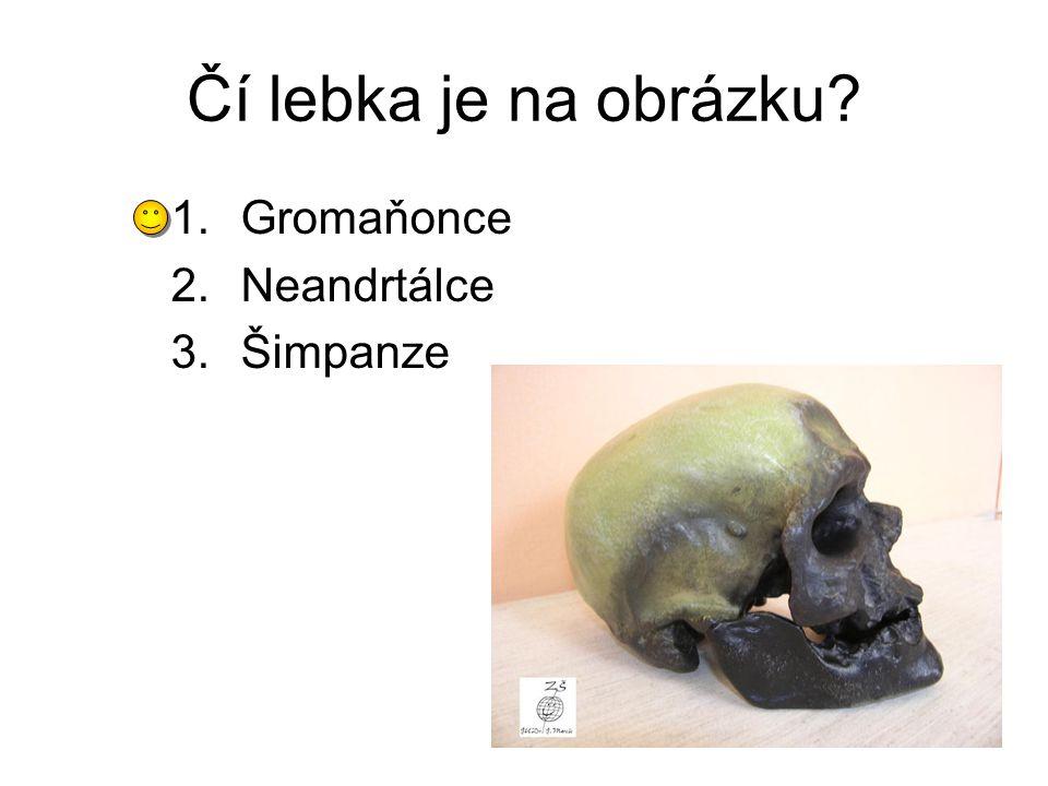 Čí lebka je na obrázku Gromaňonce Neandrtálce Šimpanze