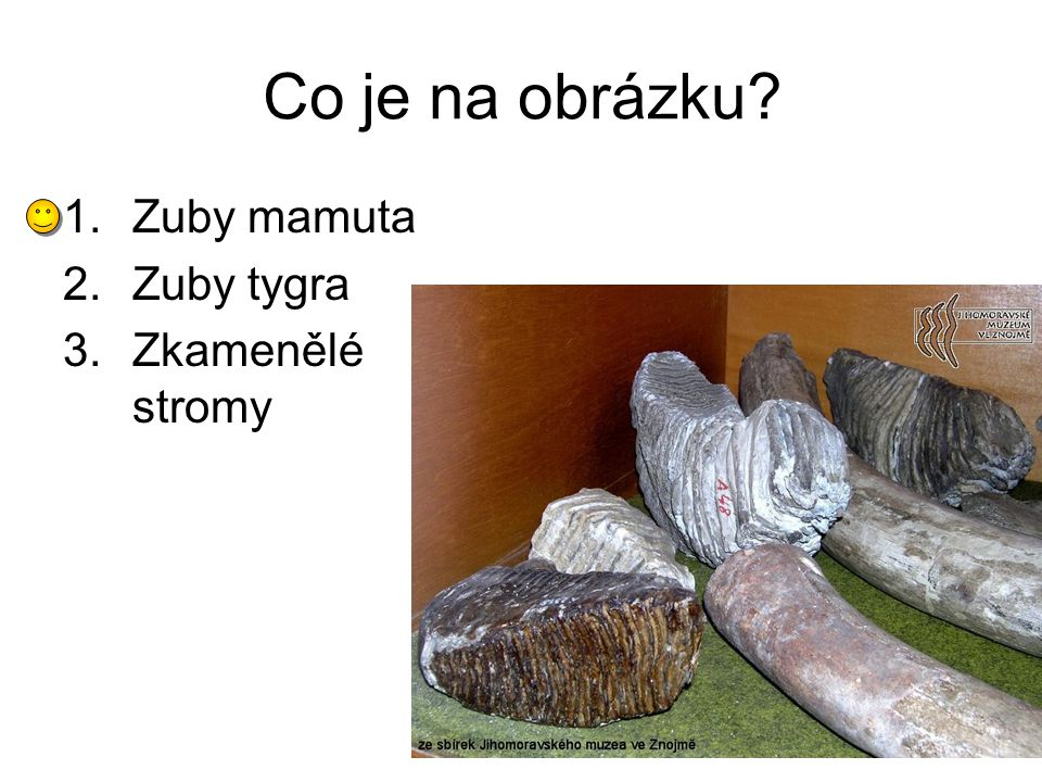 Co je na obrázku Zuby mamuta Zuby tygra Zkamenělé stromy
