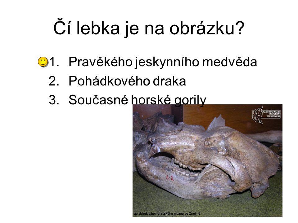 Čí lebka je na obrázku Pravěkého jeskynního medvěda Pohádkového draka