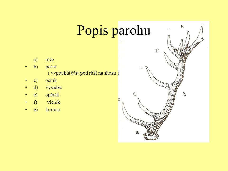 Popis parohu a) růže b) pečeť ( vypouklá část pod růží na shozu )