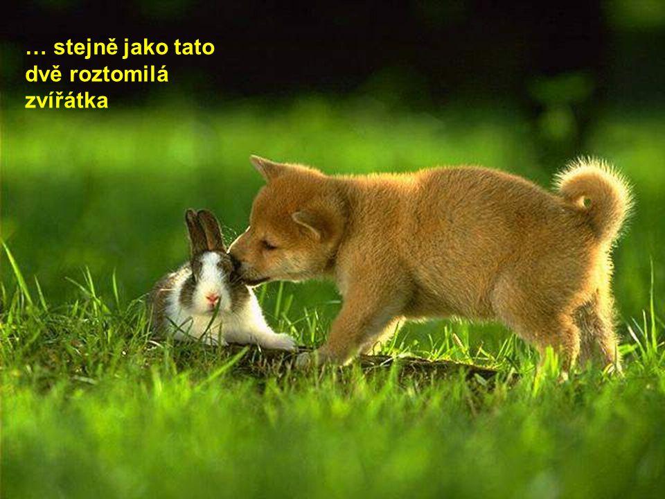 … stejně jako tato dvě roztomilá zvířátka