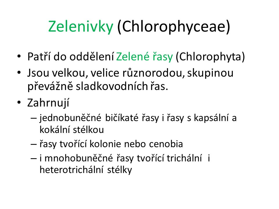 Zelenivky (Chlorophyceae)