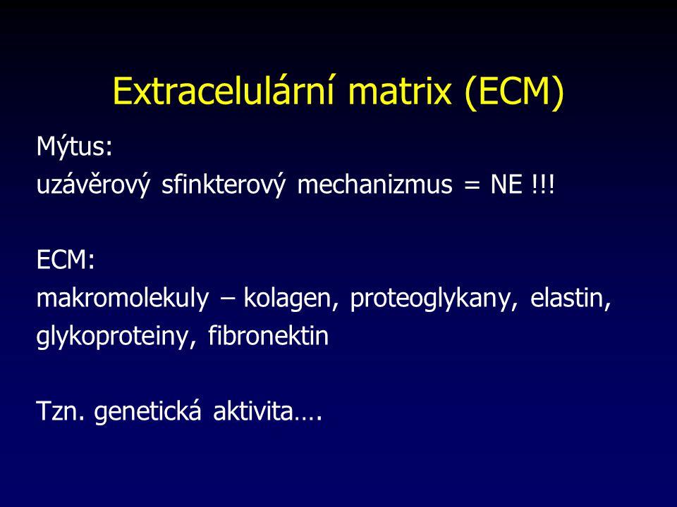 Extracelulární matrix (ECM)