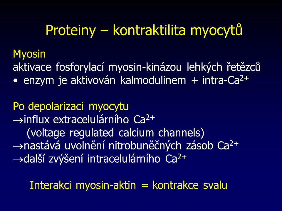 Proteiny – kontraktilita myocytů