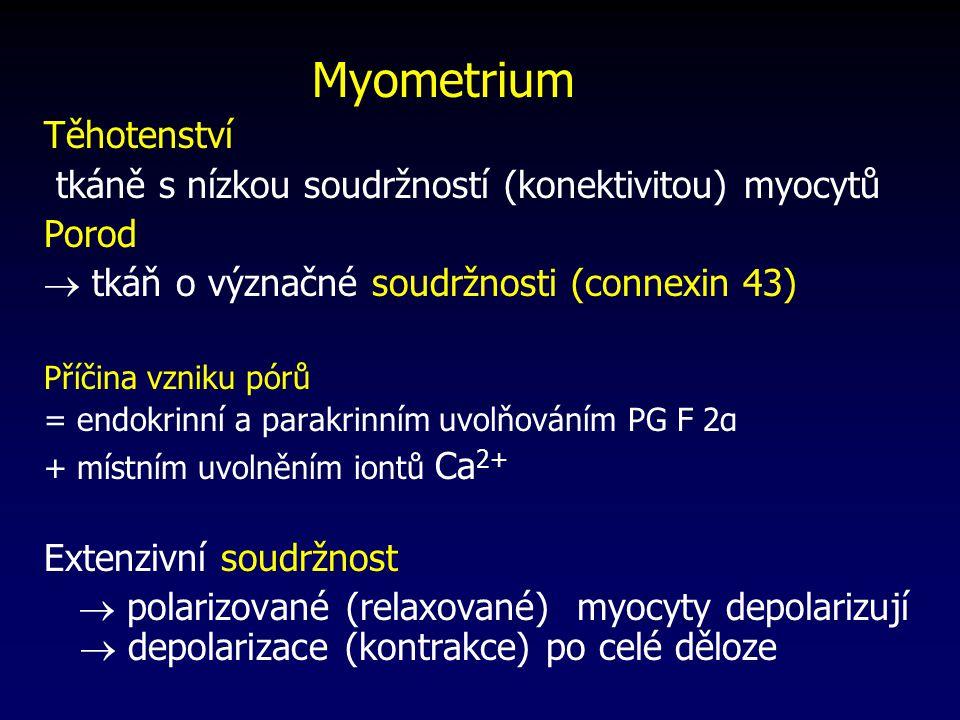 tkáně s nízkou soudržností (konektivitou) myocytů Porod