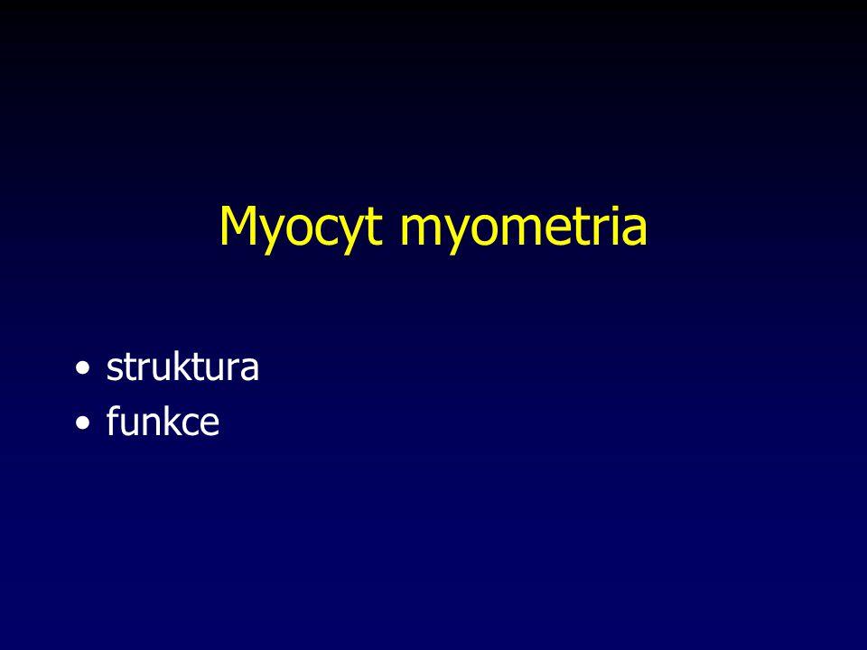 Myocyt myometria struktura funkce