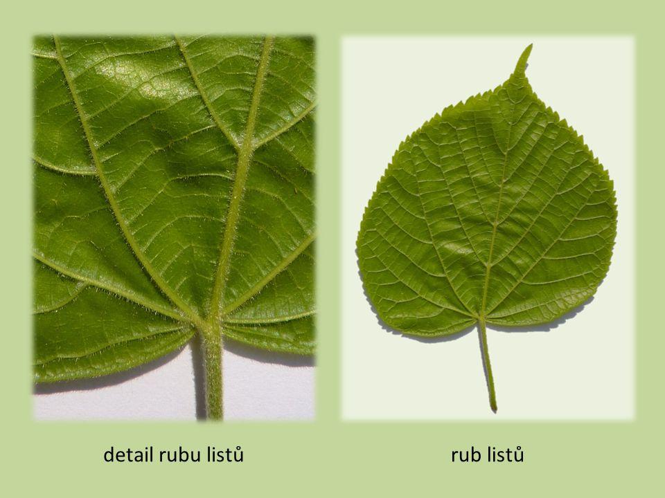 detail rubu listů rub listů