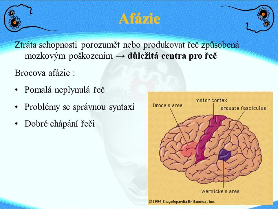 Afázie Ztráta schopnosti porozumět nebo produkovat řeč způsobená mozkovým poškozením → důležitá centra pro řeč.