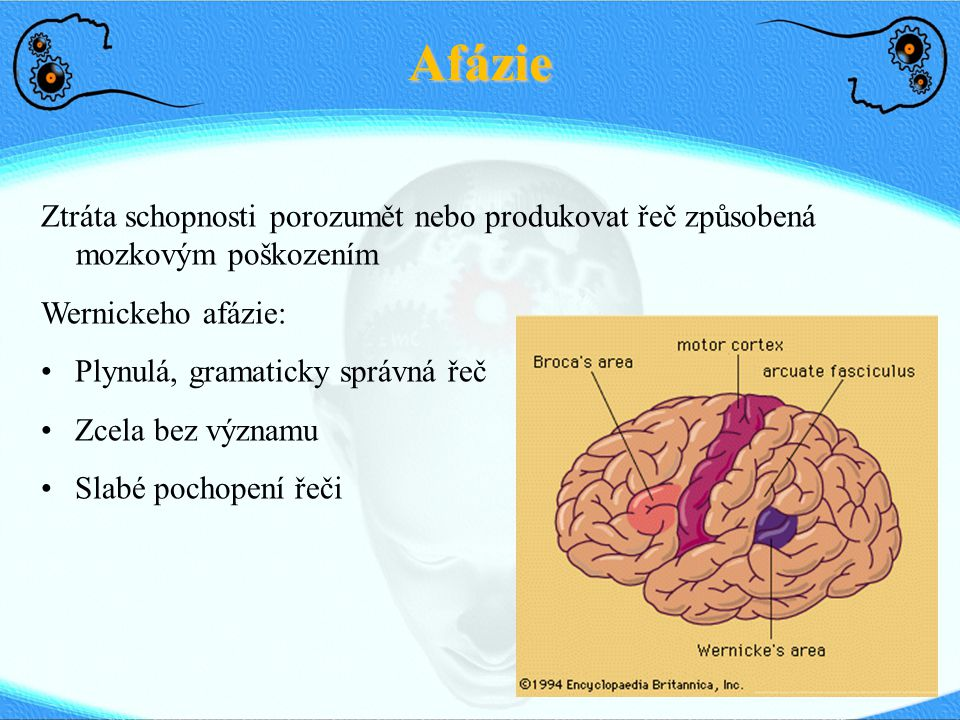 Afázie Ztráta schopnosti porozumět nebo produkovat řeč způsobená mozkovým poškozením. Wernickeho afázie: