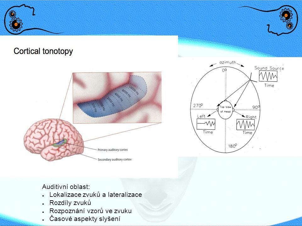 Auditivní oblast: Lokalizace zvuků a lateralizace.