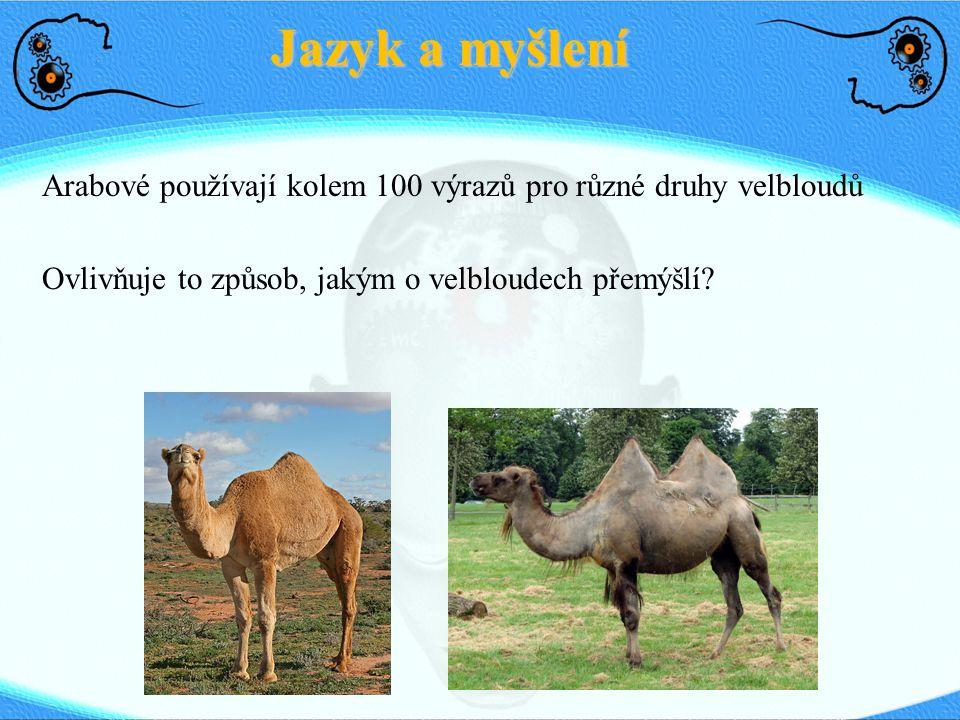 Jazyk a myšlení Arabové používají kolem 100 výrazů pro různé druhy velbloudů. Ovlivňuje to způsob, jakým o velbloudech přemýšlí