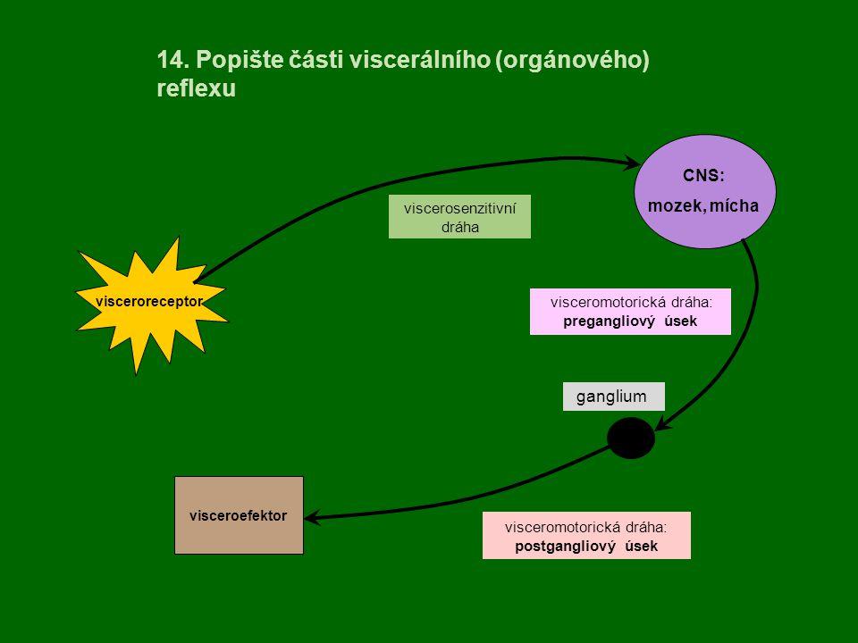 14. Popište části viscerálního (orgánového) reflexu