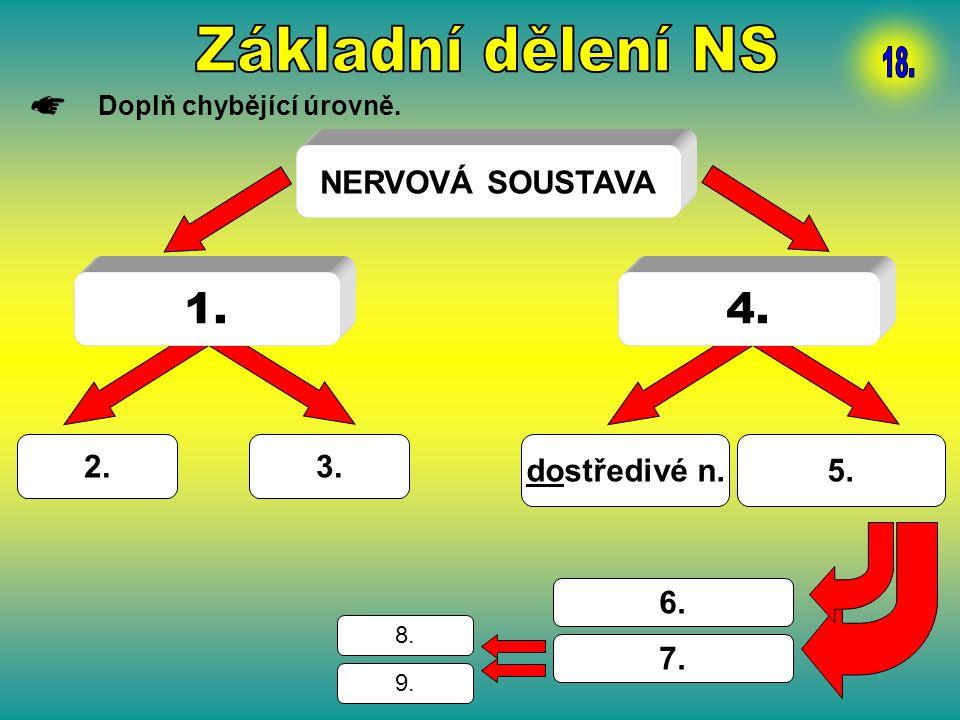 Základní dělení NS 18. 1. 4. NERVOVÁ SOUSTAVA 2. 3. dostředivé n. 5.