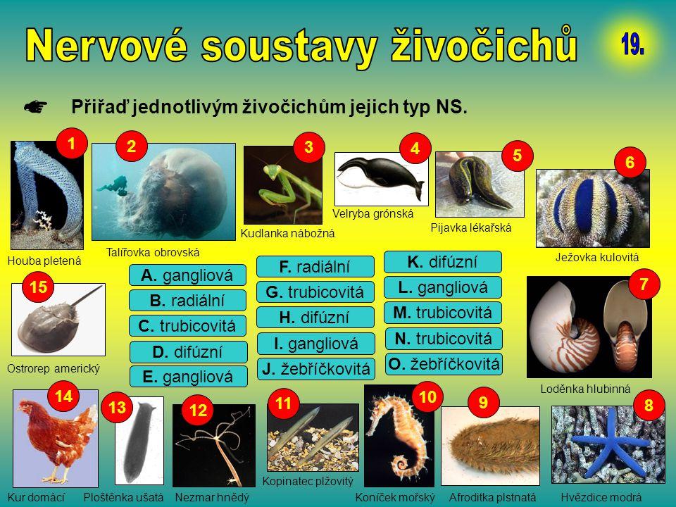 Nervové soustavy živočichů