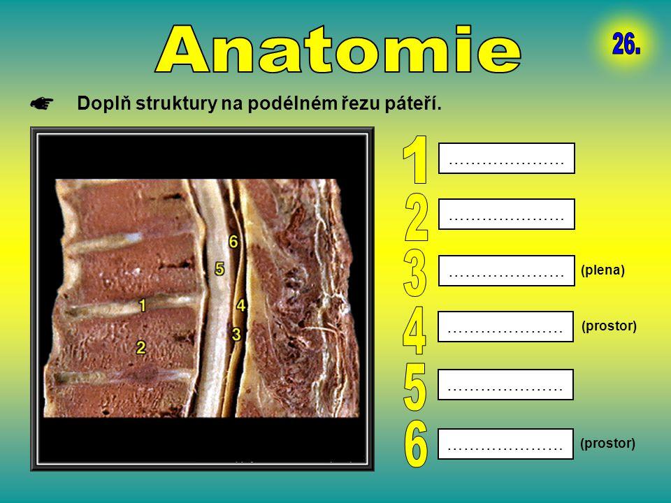 Anatomie 26. 1 2 3 4 5 6 Doplň struktury na podélném řezu páteří.