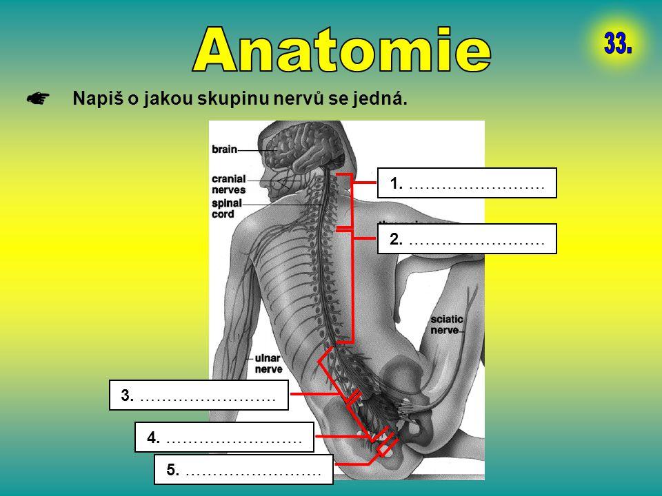 Anatomie 33. Napiš o jakou skupinu nervů se jedná. 1. …………………….