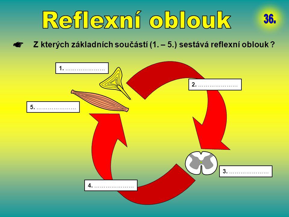 Reflexní oblouk 36. Z kterých základních součástí (1. – 5.) sestává reflexní oblouk 1. ………………… 2. …………………