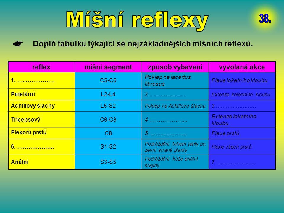 Míšní reflexy 38. Doplň tabulku týkající se nejzákladnějších míšních reflexů. reflex. míšní segment.