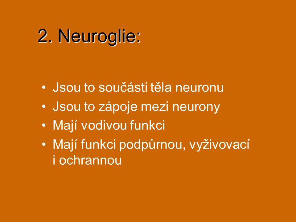 2. Neuroglie: Jsou to součásti těla neuronu
