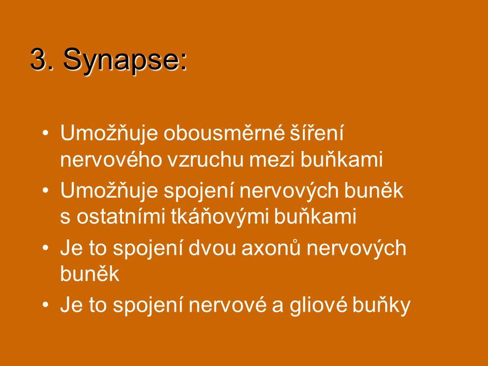 3. Synapse: Umožňuje obousměrné šíření nervového vzruchu mezi buňkami