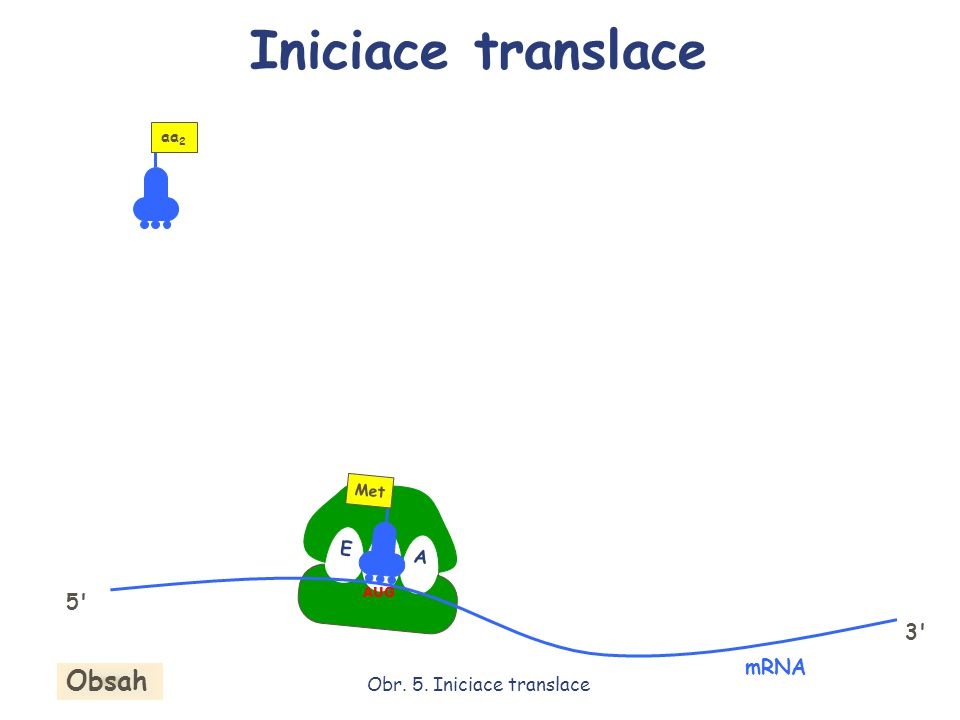 Obr. 5. Iniciace translace