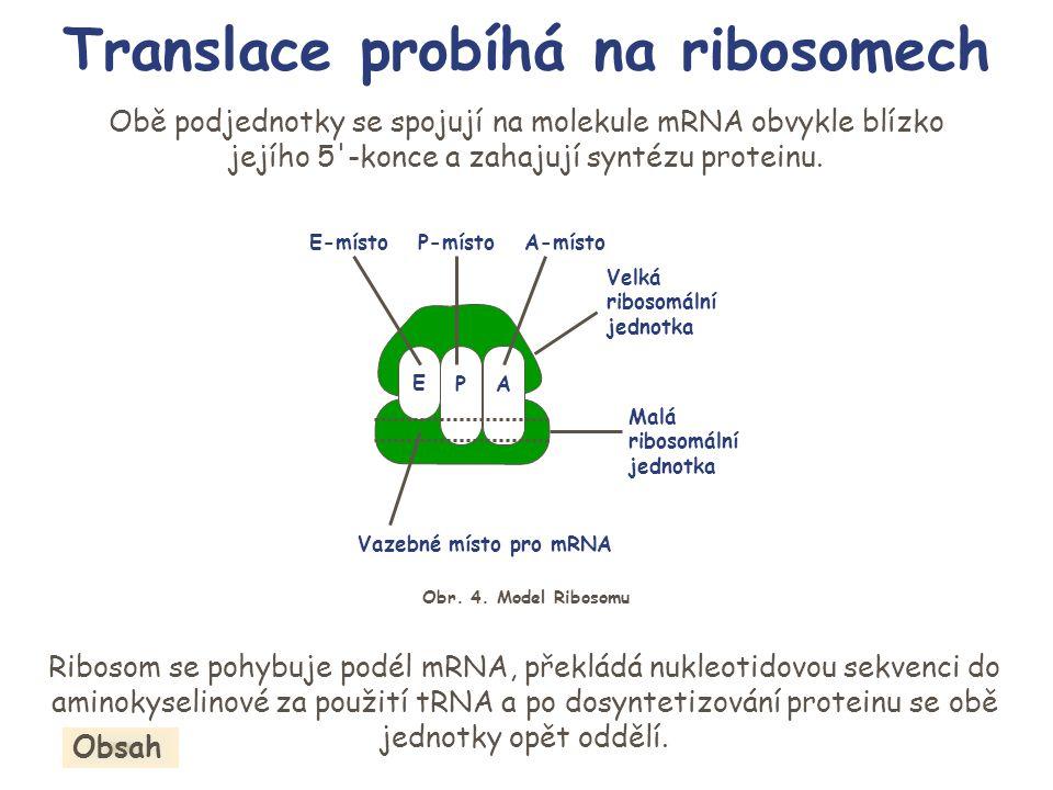 Translace probíhá na ribosomech