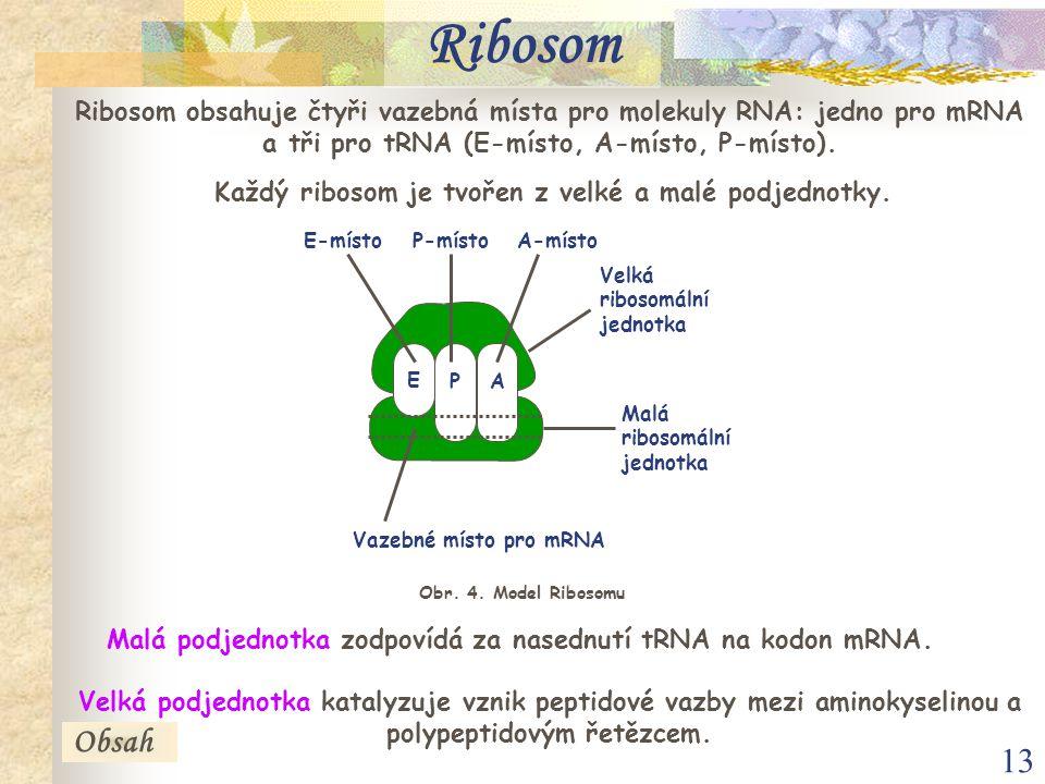 Ribosom Ribosom obsahuje čtyři vazebná místa pro molekuly RNA: jedno pro mRNA a tři pro tRNA (E-místo, A-místo, P-místo).