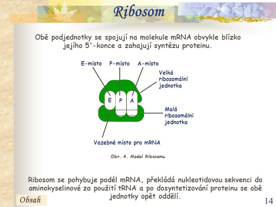 Ribosom Obě podjednotky se spojují na molekule mRNA obvykle blízko jejího 5 -konce a zahajují syntézu proteinu.