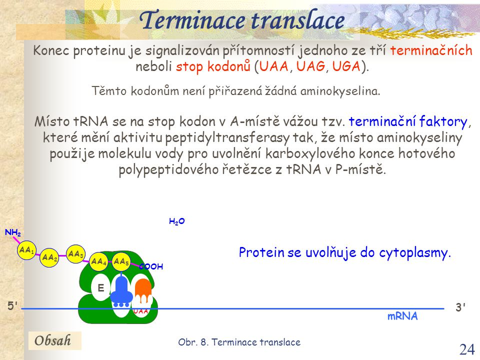 Terminace translace Obsah