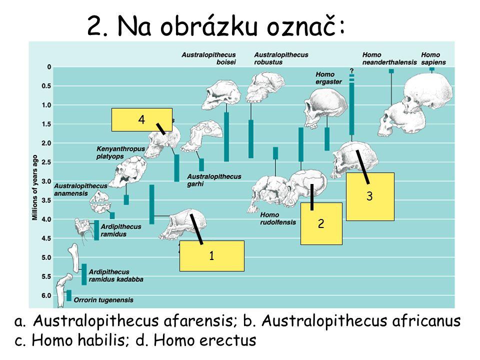 2. Na obrázku označ: 4. 3. 2. 1. Australopithecus afarensis; b.